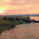 Elephants crossing 2
