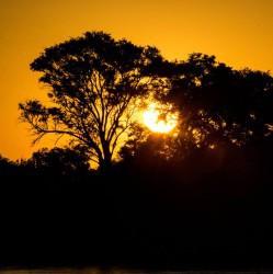 Through trees (Judit Deak)